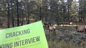 Mule deer need to program too!