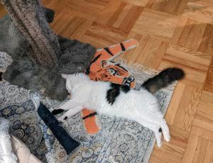 Niku sleeping on the floor