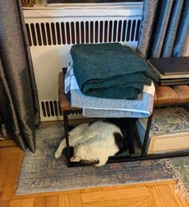 Niku sleeping in cat pose